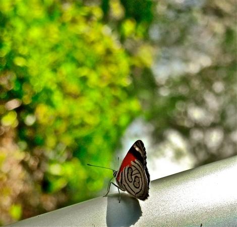 88butterfly